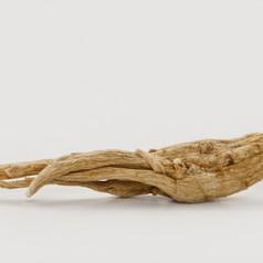 Le ginseng, la plante antifatigue idéale pour votre santé